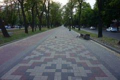 Öde gränd längs avenyn, med den stenlade kullerstenvägen Royaltyfri Fotografi