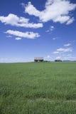 Öde kabin och grönt fält Royaltyfri Foto