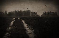 Öde väg i den spöklika skogen arkivbilder
