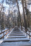 Öde väg i en snöig skog Arkivfoton