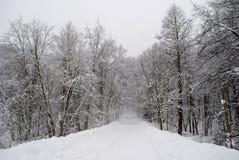 Öde väg i vinterskog Arkivfoto