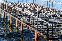 Ödelagd skeppsdocka med Seagulls och det lugna havet arkivbild