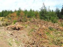 Ödelagd skog arkivbilder