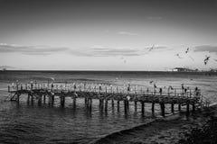 Ödelagd stålkonstruktion Pier On Seaside arkivbild