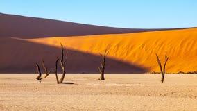 Ödelagd torr landscpe och döda kameltaggträd i den Deadvlei pannan med sprucken jord i den röda mitt av den Namib öknen royaltyfria bilder