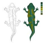 Ödla för materielvektorfärgläggning Royaltyfria Bilder