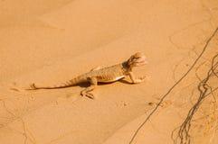 Ödla i öknen på den gula sanden arkivfoto
