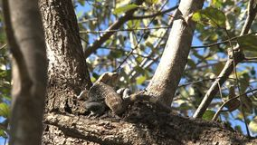 Ödla i ett träd i skogen lager videofilmer