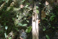 Ödla på en palmblad royaltyfri bild