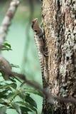 Ödla på en trädstam Royaltyfri Bild