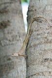 Ödla på ett träd i kamouflage Arkivbild