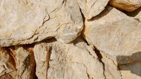 Ödla på stenblock 4 arkivbild