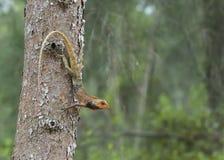 Ödla på träd Arkivfoton