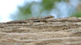 Ödla på trädet i tropisk regnskog lager videofilmer