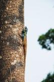 Ödla på treen Arkivbild