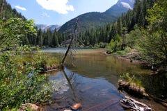 Ödla sjö nära kristallen, Colorado royaltyfri bild