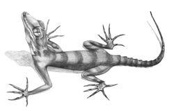 Ödlan hand-drog illustrationen skissar in stil stock illustrationer