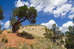 Ödland-Szene mit Zeder-Baum Stockfotos
