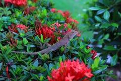 Ödlor är reptilar som är i skogen med naturlig bakgrund för röda blommor royaltyfri foto