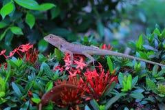 Ödlor är reptilar som är i skogen med naturlig bakgrund för röda blommor fotografering för bildbyråer