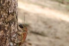 Ödlor äter kryp i trädgården arkivbilder