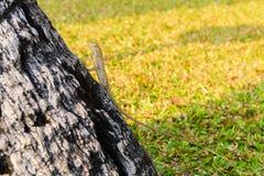 Ödlor kameleont, kameleont på träd royaltyfri fotografi