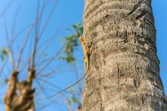 Ödlor kameleont, kameleont på träd arkivfoton