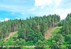 Öffnen im Wald Stockfotos