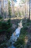 Öffnen Sie Abzugsgraben im Wald Stockfoto