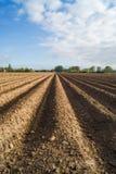 Öffnen Sie Ackerland in Doetinchem, Holland die Niederlande. Stockfotografie
