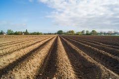Öffnen Sie Ackerland in Doetinchem, Holland die Niederlande. Stockbild