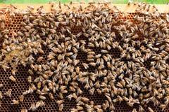 Öffnen Sie Bienenstock, Imkerei lizenzfreie stockfotos