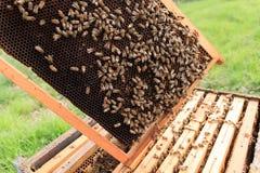 Öffnen Sie Bienenstock, Imkerei lizenzfreies stockbild