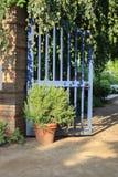 Öffnen Sie blaues Tor im Garten mit hängendem Efeu und Topfpflanze Lizenzfreie Stockbilder