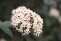 Öffnen Sie Blumen stockfotos