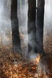 Öffnen Sie Feuer im Wald Lizenzfreies Stockbild