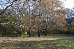 Öffnen Sie Grasbereich auf Central Park, New York Lizenzfreies Stockfoto