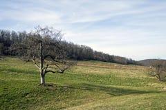 Öffnen Sie Landschaft lizenzfreie stockbilder