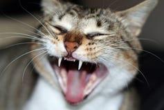 Öffnen Sie mouthed Katze Lizenzfreie Stockfotos