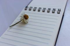 Öffnen Sie Notizbuch mit leeren Seiten und kleiner Kamillenblume auf ihr Zwei Bleistifte und unbelegtes Papier Tagebuch- und Orga Lizenzfreie Stockbilder