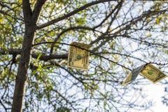 Öffnen Sie Satz Zigaretten mit einem Filter und einer machine-gun Kassette Bild des Baums mit Dollar Lizenzfreies Stockbild
