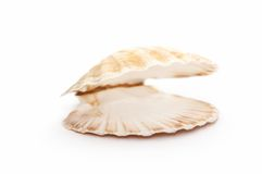 Öffnen Sie Seashell stockbild