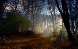Öffnen Sie Straße durch magischen Wald Stockfotografie
