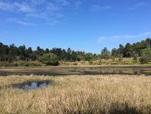 Öffnen Sie Sumpfgebiet Lizenzfreie Stockfotos