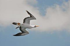 Öffnen Sie Vogelflügel Lizenzfreie Stockbilder