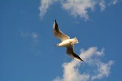 Öffnen Sie Vogelflügel Stockbilder