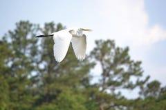 Öffnen Sie Vogelflügel Stockfoto