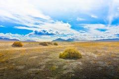 Öffnen Sie Wüsten-Wiese und Büsche Lizenzfreie Stockfotografie