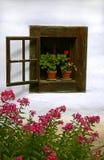 Öffnen Sie Weinlesefenster mit roter Pelargonie Lizenzfreie Stockfotografie