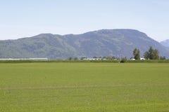Öffnen Sie weit Ackerland im Fraser Tal Stockbilder